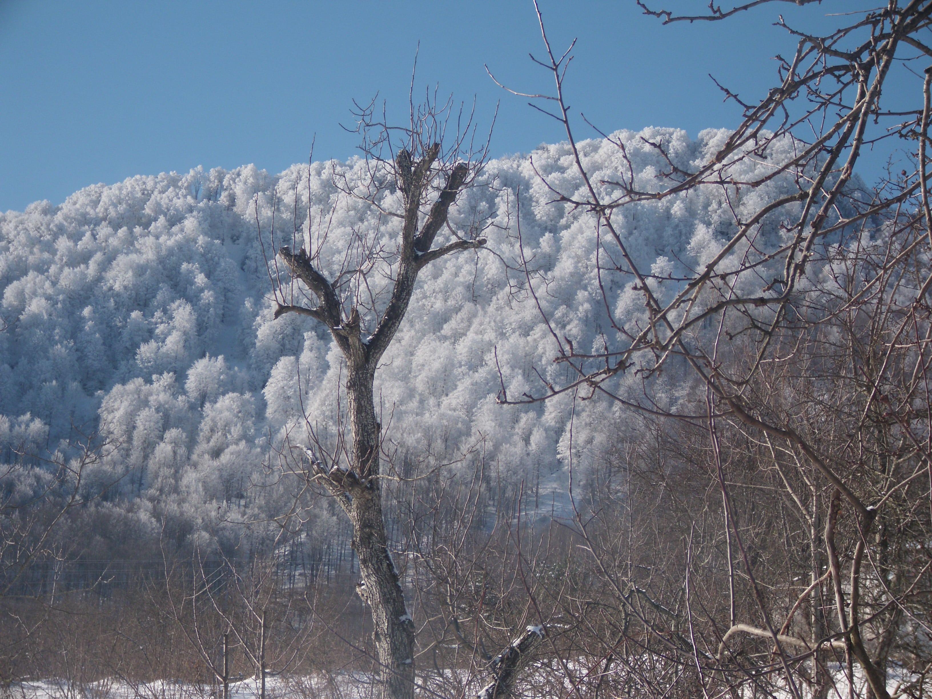 Nebiyan Yaylası ve Dağı 1 - Nebiyan Yaylası ve Dağı (1)