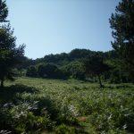Nebiyan Yaylası ve Dağı 10 150x150 - Foto Galeri