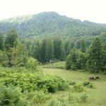 Nebiyan Yaylası ve Dağı 8 150x150 - Foto Galeri