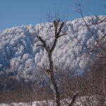 Nebiyan Dağı Kış Resimleri 1 150x150 - Nebiyan Yaylası Kış Resimleri