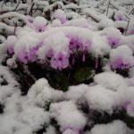 Nebiyan Dağı Kış Resimleri 2 150x150 - Nebiyan Yaylası Kış Resimleri