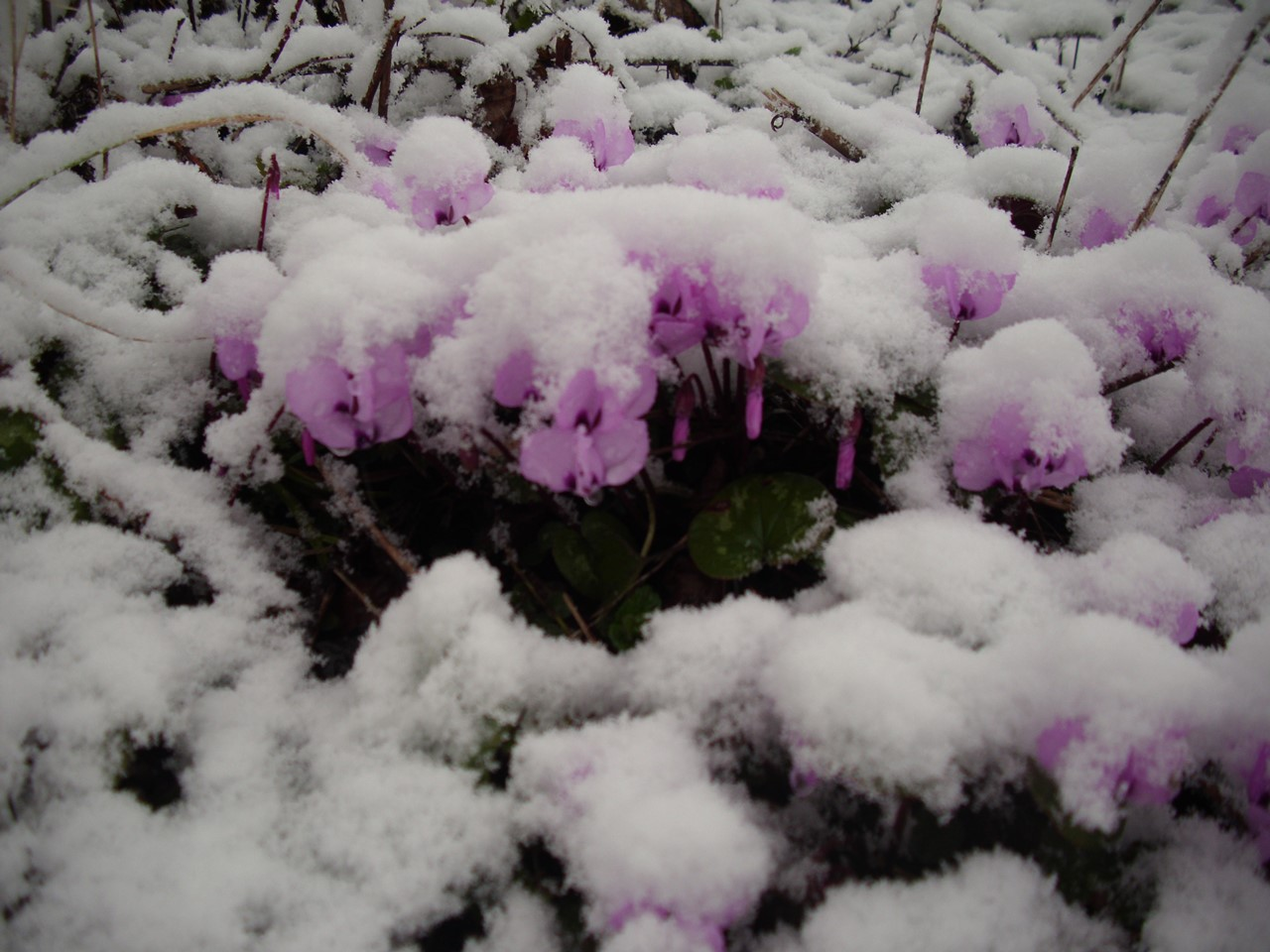 Nebiyan Dağı Kış Resimleri 2 - Nebiyan Dağı Kış Resimleri (2)