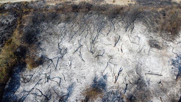 0x0 son dakika kizilirmak deltasi kus cennetinde yangin 1600175934849 - Yörüklerde yangın çıktı