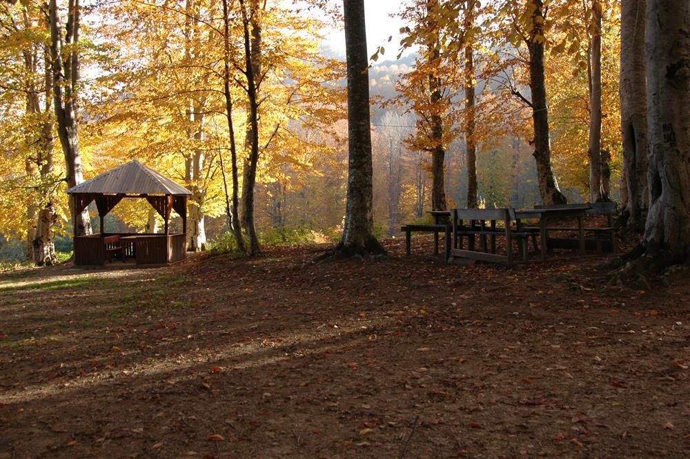 269710nebiyan orman2jpg 2 - İşte Ruhunuzu rahatlatacak nebiyan'nın temiz doğası