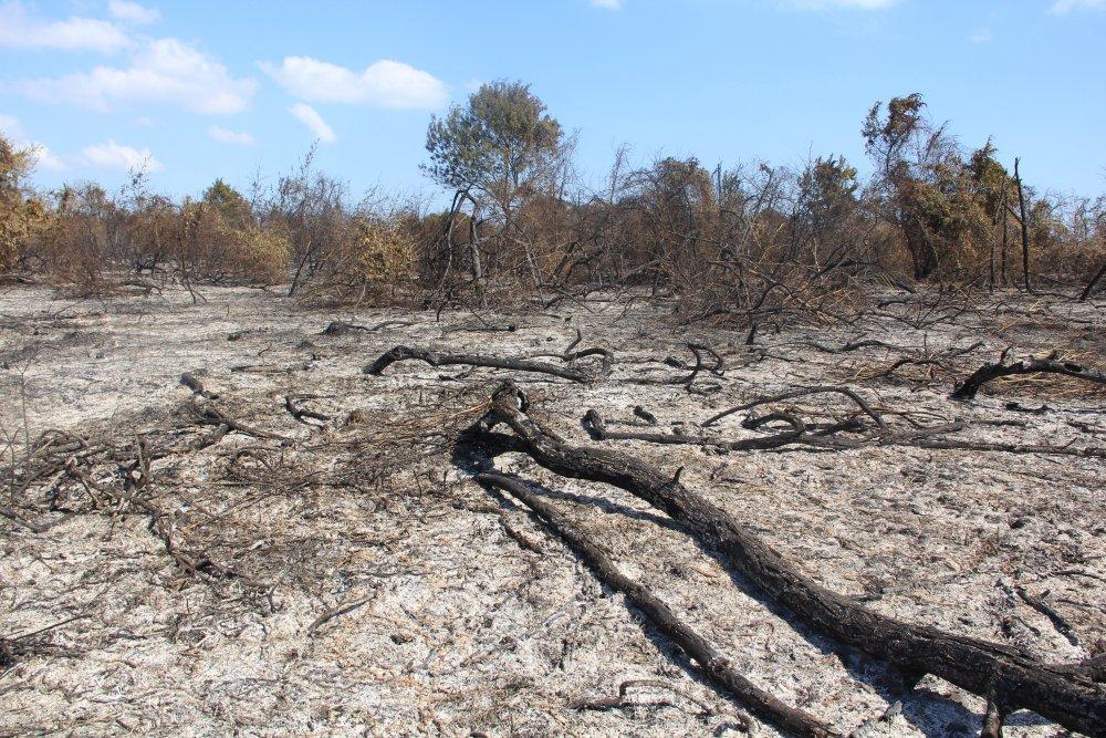 cccc 3 - Kızılırmak deltasındaki yangın sonrası kalan görüntüler