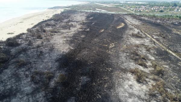 kizilirmak deltasi kus cennetindeki yanginda 2 bin donum alan zarar gordu 16092012 m2 - Kızılırmak deltasındaki yangın sonrası kalan görüntüler