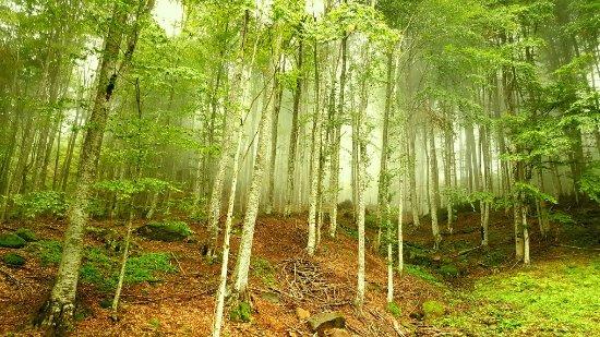 nebiyan dagi 2 - İşte Ruhunuzu rahatlatacak nebiyan'nın temiz doğası
