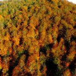 2359804 5fe77ad034f7138b9654ebec7945bb24 640x640 150x150 - Nebiyan dağı sonbahar manzarası